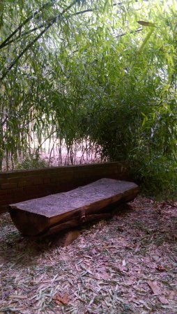Bristol, RI: Hidden bench in the bamboo grove