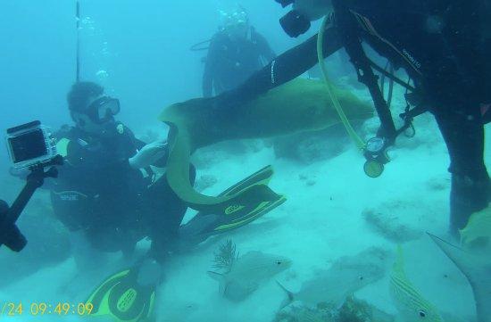 Tavernier, FL: Petting a Moray eel