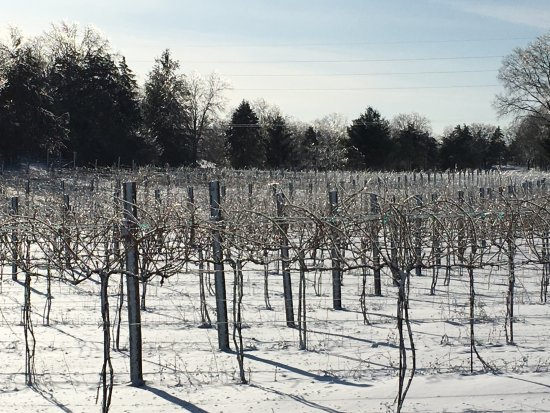 Poynette, WI: ice covered vines