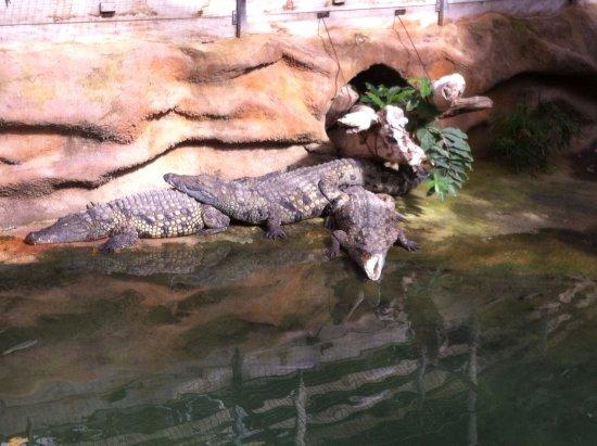 Pierrelatte, Francia: La ferme aux crocodiles
