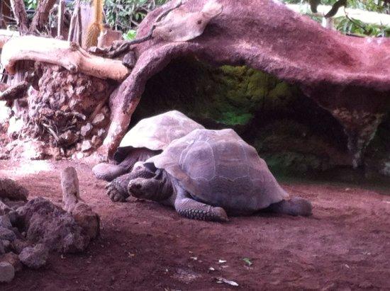 Pierrelatte, Francia: La ferme aux crocodiles - tortues galapagos