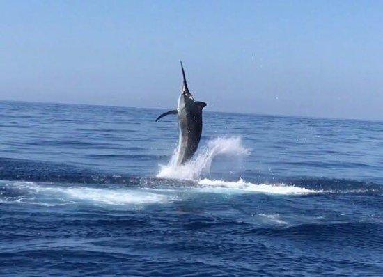 Herradura, Costa Rica: Marlin