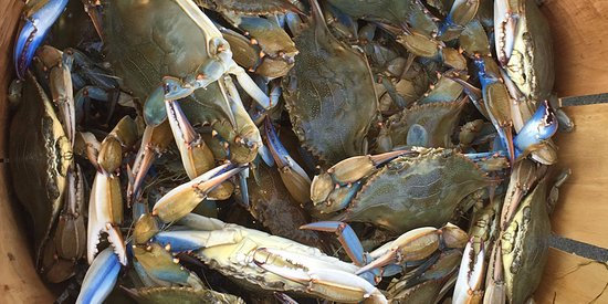 Manteo, Carolina del Norte: Blue Crabs caught on your OBX Pontoon Man fishing trip