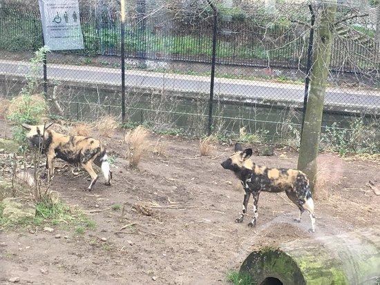 ZSL London Zoo : photo1.jpg