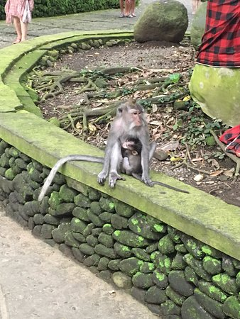 Agus Bali Private Tours: Monkey Forest Ubud