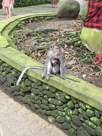 写真Agus Bali Private Tours枚