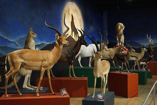 Bandera Natural History Museum: Our Juan Infante International Hall displays magnificent animals