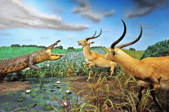 natural habitats for animals