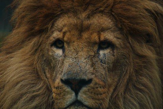 Smarden, UK: Beautiful Lion by heritage lodge