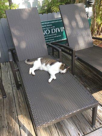 Merlin Guest House Key West: photo0.jpg