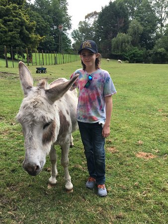 Mokoia Downs Estate B&B : Our son with one of the donkeys.