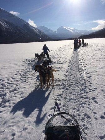 Snowy Owl Sled Dog Tours: Crossing the Lake half way through the Powder Hound Express, just beautiful!