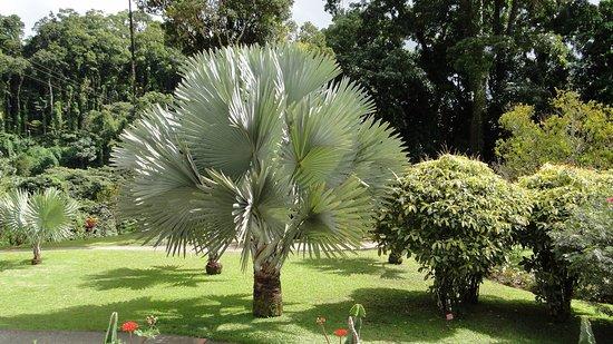 Jardin de Balata: Surprenant dès l'entrée