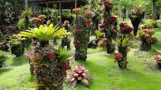 Jardin de Balata: Des arbres à fleurs