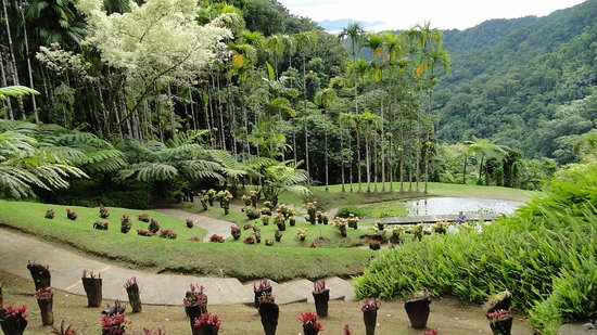 Jardin de Balata: Rangée de cocotiers bien alignée