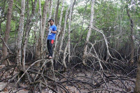 Национальный парк Уэст-Бали, Индонезия: Mangrove bali barat