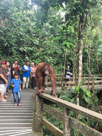 Sepilok Orangutan Sanctuary: photo0.jpg