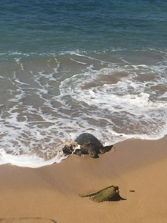 Hololani Resort: Little beach in north corner, turtles come by