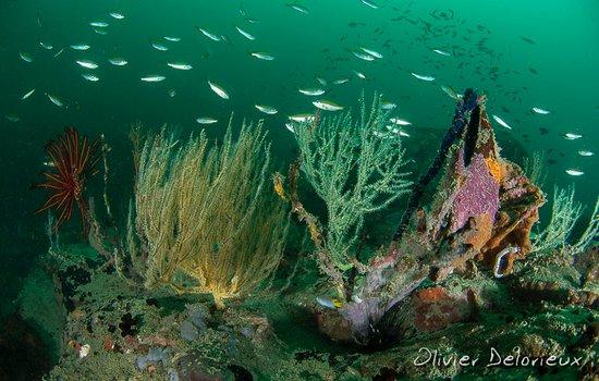 Pulau Sibu, Malaysia: Diving