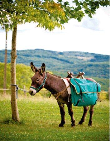 Les Eyzies-de-Tayac-Sireuil, France: Pistou, le patriarche des ânes de la Gissonie