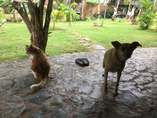 Chalet Tropical Village: Pets of Chalet Tropical including the super charming dog Simba