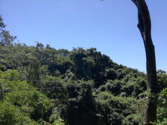 West End, Honduras: Inside the garden.