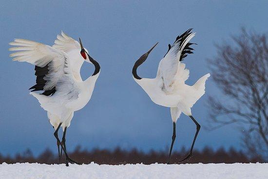 8 Best Winter Festivals In Hokkaido
