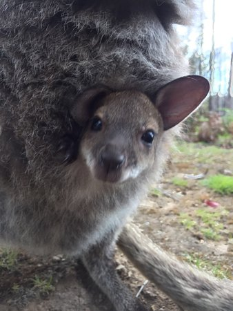St Marys, Австралия: photo1.jpg