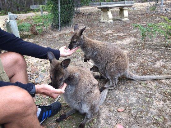 St Marys, Австралия: photo2.jpg