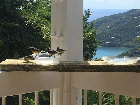 Coral Bay, St. John: Amazing piece of paradise!