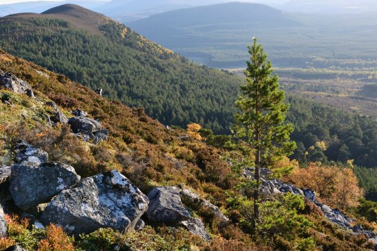 Aviemore and the Cairngorms, UK: getlstd_property_photo