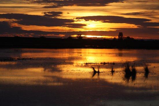 Camargue Découverte : la Camargue magnifique