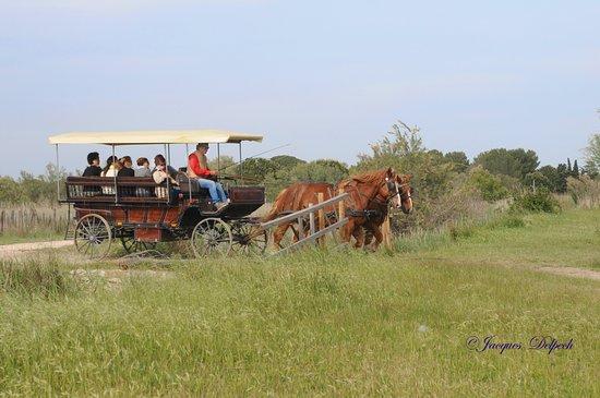 Camargue Découverte : un safari en calèche en Camargue