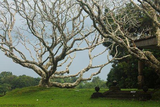 Bentota, Sri Lanka: The leafless tree offers for some stunning views