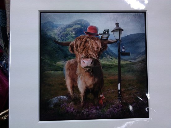 Tomintoul, UK: 'Highland Cow' by Matylda Konecka - lots more of Matylda's prints in stock!
