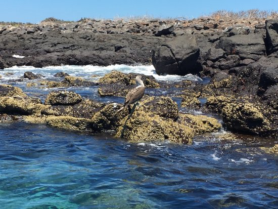 Baltra, Ekuador: Great day tour to visit the wildlife in Galapagos