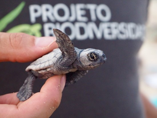 Project Biodiversity Turtle Conservation Hatchery