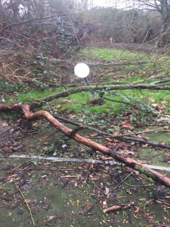 The Strand Leisure Park: Safety risk fallen trees two months not sorted