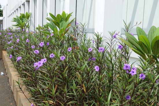 Aston Priority Simatupang Hotel & Conference Center: Flowers near carpark