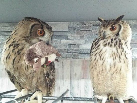 Owlpark Owl Cafe Ikebukuro tokyo: あうるぱーくフクロウカフェ池袋自由に飛び回る優ちゃん&ベンジー