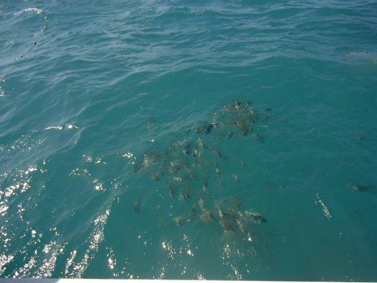 Natal, RN: Mergulho em alto mar