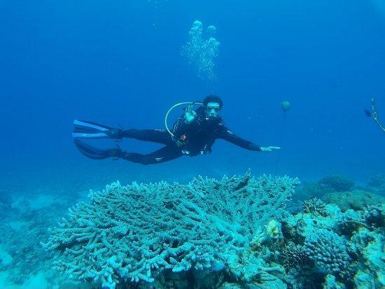 Aqaba Pro Divers: japanese garden