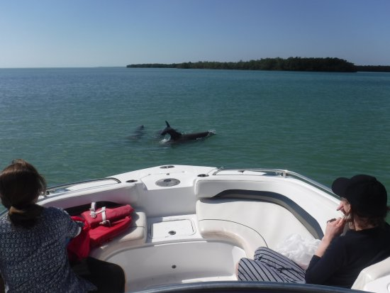 Dreamlander Tours: The dolphins were so close but not so close that we interfered with their play or feeding.