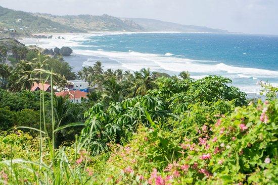 Carson's Taxi & Tour Service: Barbados coastline
