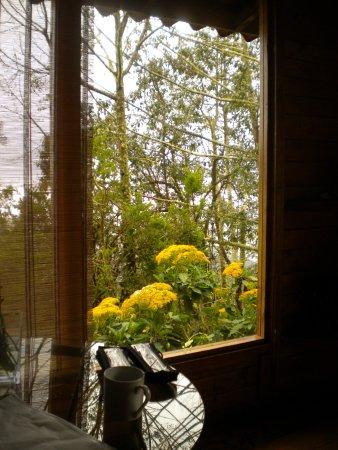 Paraiso Quetzal Lodge: Tarde de llovizna en la cabaña n°2