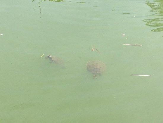 Bosque dos Buritis: unas tortugas