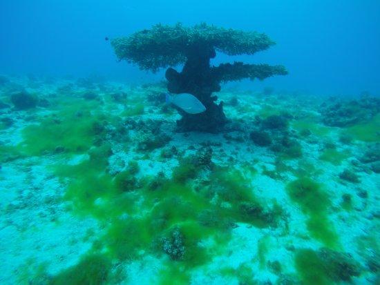 Shulamit's Eilat Diving Adventures: Under water