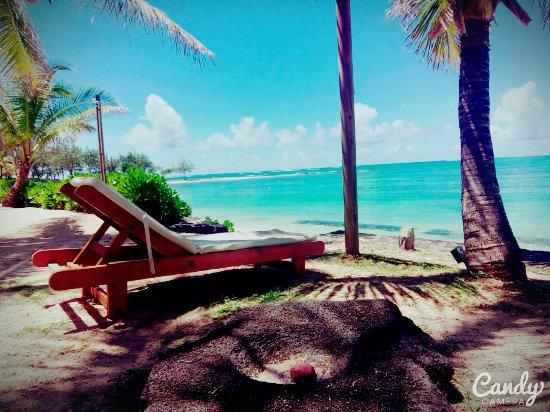 "Tropical Attitude : FB_IMG_1488181009346_large.jpg"""