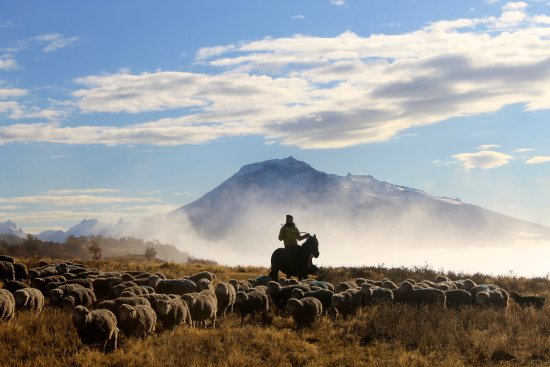 Estancia La Peninsula: Our sheep are living freely and as naturally as possible