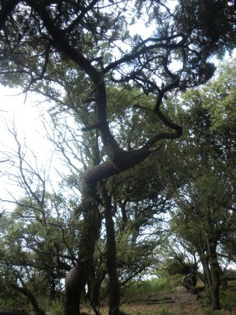 Albertville, France: des forets d'arbres étranges vous attendent